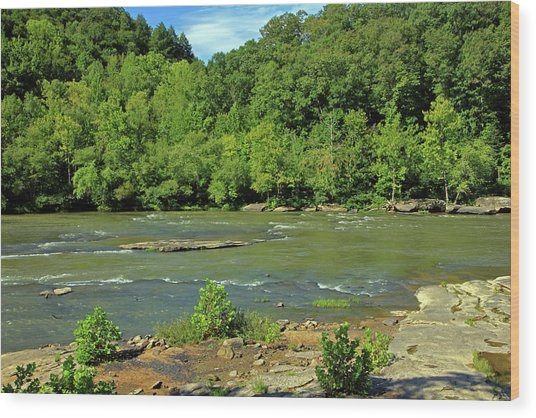 Wood Print featuring the photograph Forest At Cumberland River by Angela Murdock