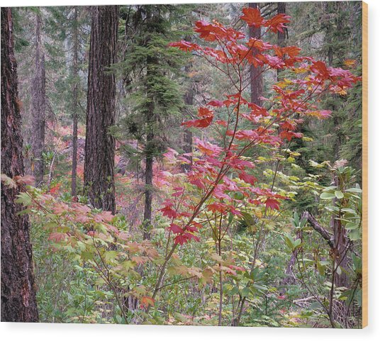 Forest Autumn Wood Print by Leland D Howard
