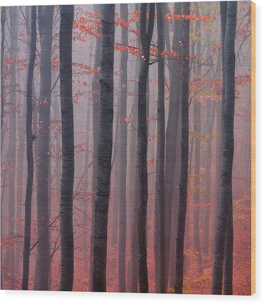 Forest Barcode Wood Print
