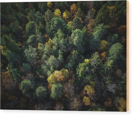 Forest Landscape - Aerial Photography Wood Print