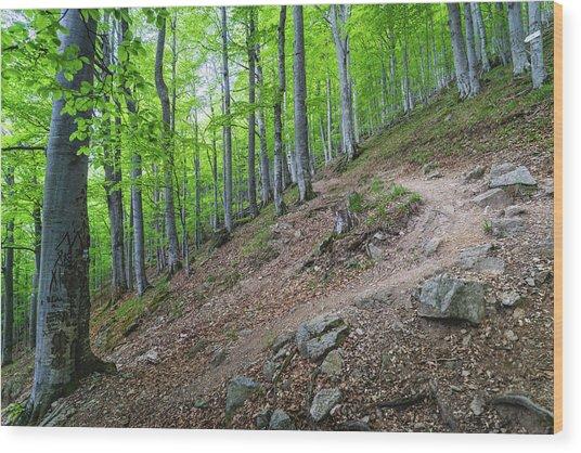 Forest On Balkan Mountain, Bulgaria Wood Print