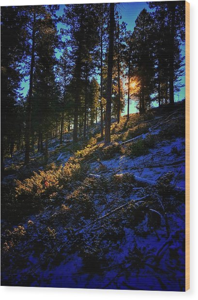 Wood Print featuring the photograph Forest Sunrise by Dan Miller