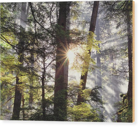 Forest Sunrise Wood Print by Leland D Howard