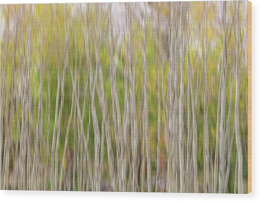 Wood Print featuring the photograph Forest Twist And Turns In Motion by James BO Insogna