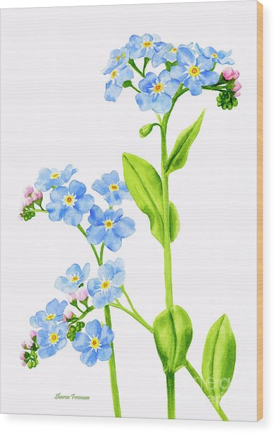 Forget-me-nots On White Wood Print