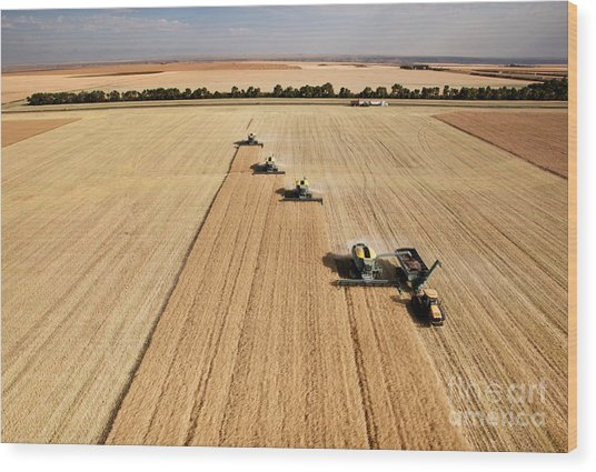 Four Harvesters Combing On A Prairie Wood Print