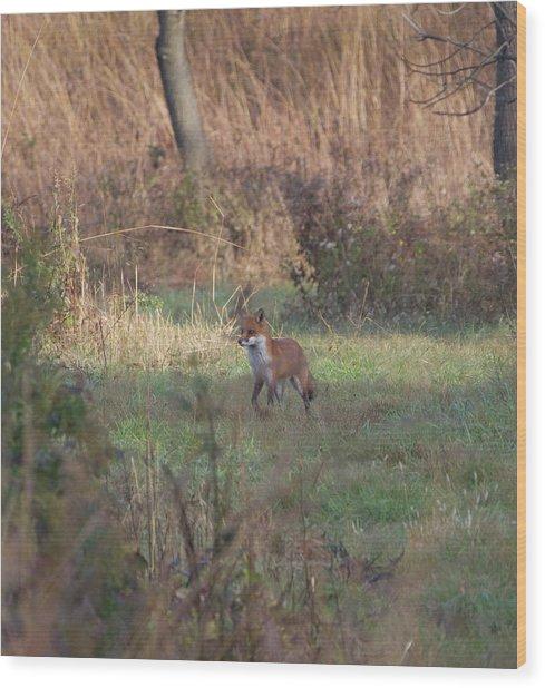 Fox On Prowl Wood Print