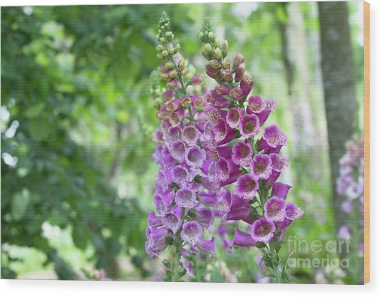 Foxglove Purple Carousel  Wood Print