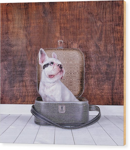 French Bulldog Puppy Inside An Old Wood Print by Maika 777