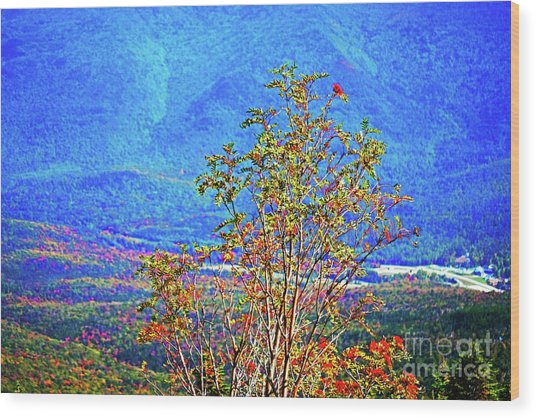 Wood Print featuring the photograph From Mount Washington by Patti Whitten