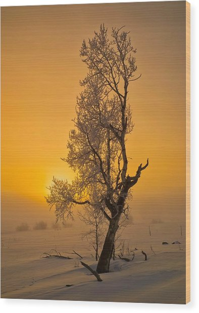 Frosted Tree Wood Print
