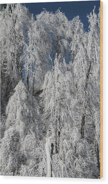 Frosted Trees Wood Print