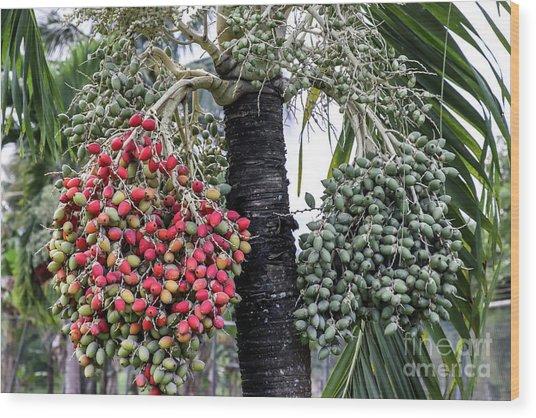 Fruity Palm Tree  Wood Print