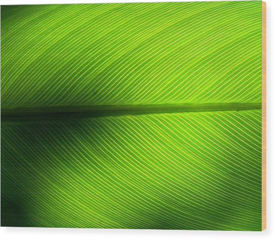 Full Frame Shot Of Green Leaf Wood Print by Kiyoshi Nasu / Eyeem