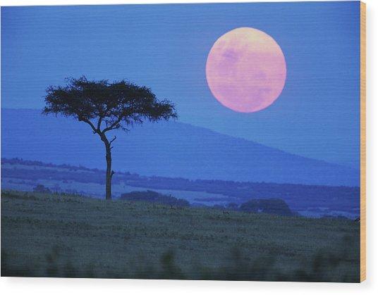 Full Moon Rising Above Tree, Savanna Wood Print by Paul Souders