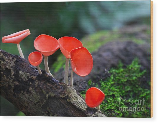 Fungi Cup Red Mushroom Champagne Cup Wood Print