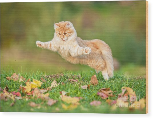 Funny Cat Flying In The Air In Autumn Wood Print