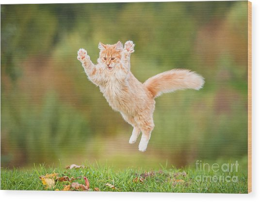 Funny Red Cat Flying In The Air In Wood Print