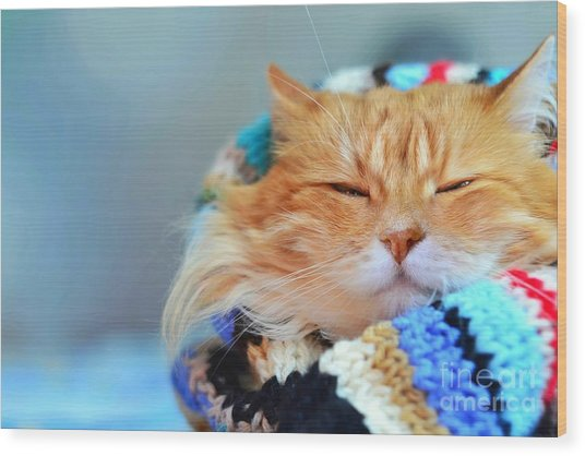 Funny Red Cat In Cozy Home Atmosphere Wood Print