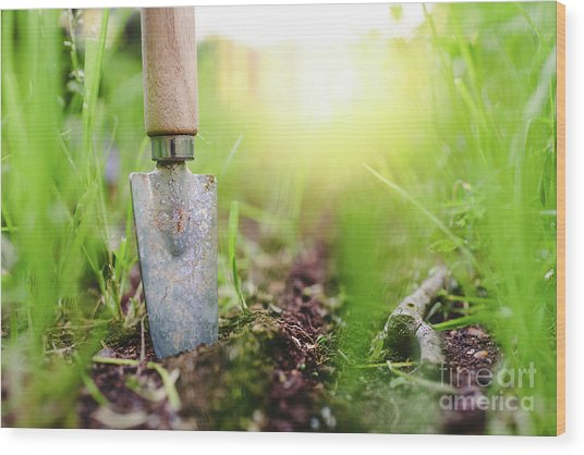Gardening Shovel In An Orchard During The Gardener's Rest Wood Print