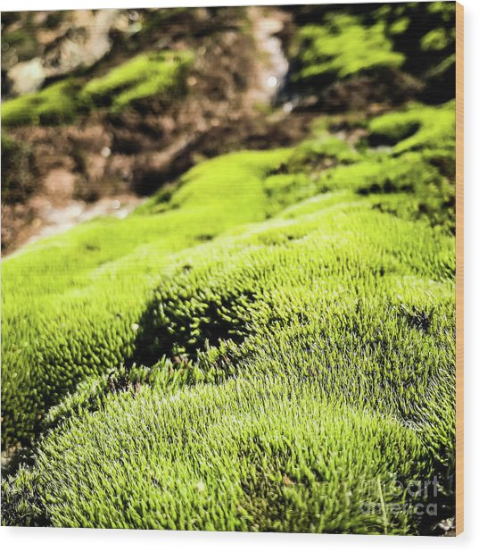 Wood Print featuring the photograph Tiny Forest 1 by Atousa Raissyan