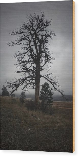 Wood Print featuring the photograph Ghostly Snag by Dan Miller