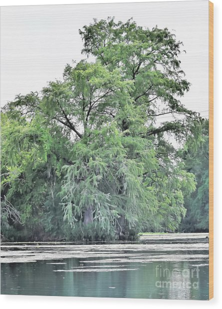 Giant River Tree Wood Print