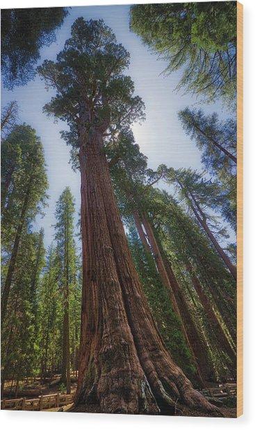 Giant Sequoia Tree Wood Print