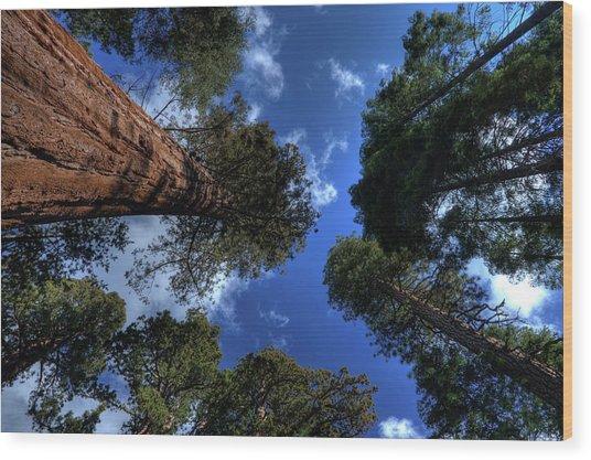 Giant Sequoias - 2 Wood Print by Rhyman007