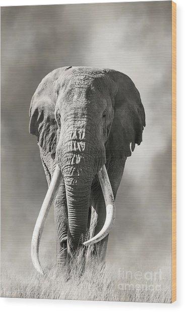 Giant Tusked Bull Elephant In Amboseli, Kenya Wood Print