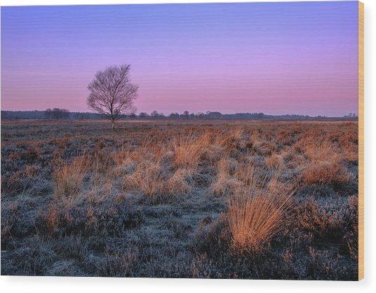 Ginkelse Heide Wood Print