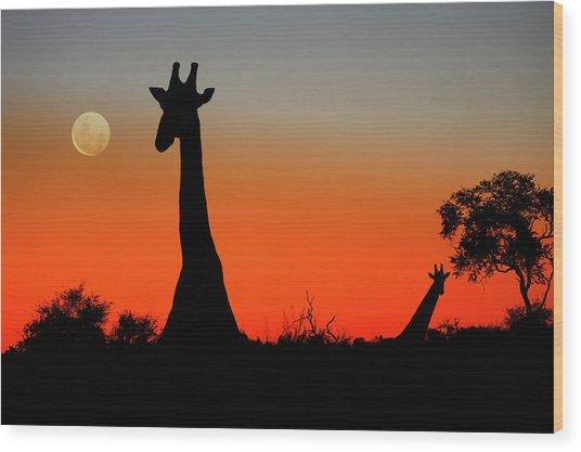 Giraffes Wood Print by Steve Allen