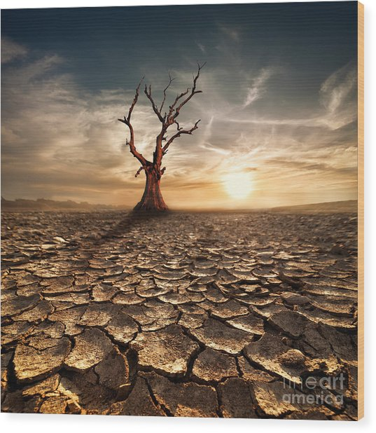 Global Warming Concept. Lonely Dead Wood Print