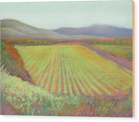 Gloria Ferrer Winery Wood Print