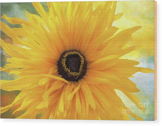 Wood Print featuring the photograph Gloriosa Daisy by Ann Jacobson