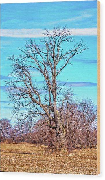 Gnarled Tree And Marbled Sky Wood Print