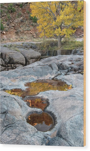 Gold Reflection Wood Print
