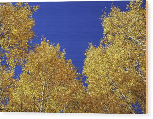 Golden Aspens And Blue Skies Wood Print