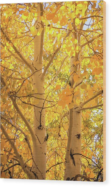 Golden Aspens In Grand Canyon, Vertical Wood Print