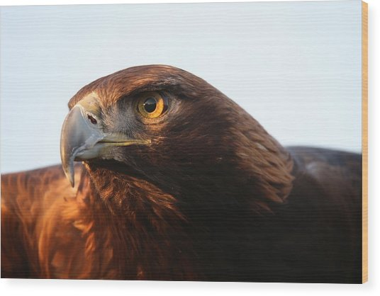 Golden Eagle 5151803 Wood Print