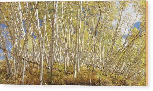Wood Print featuring the photograph Golden Forest Fantasy by James BO Insogna