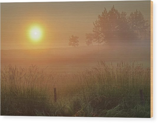 Golden Morning Wood Print