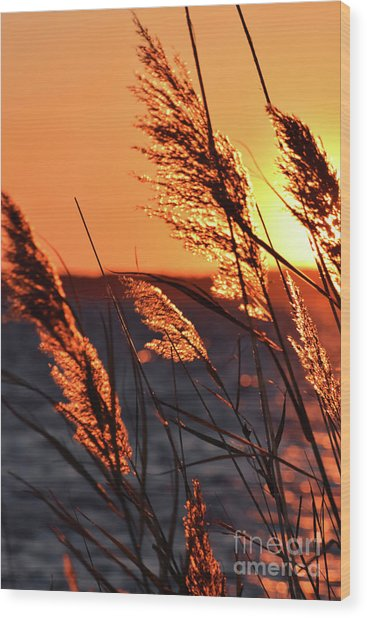 Wood Print featuring the photograph Golden Reeds by Patti Whitten