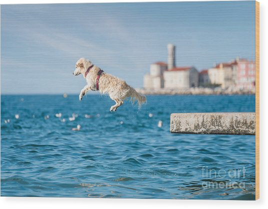 Golden Retriever Dog Jumping Into Sea Wood Print by Sonsart
