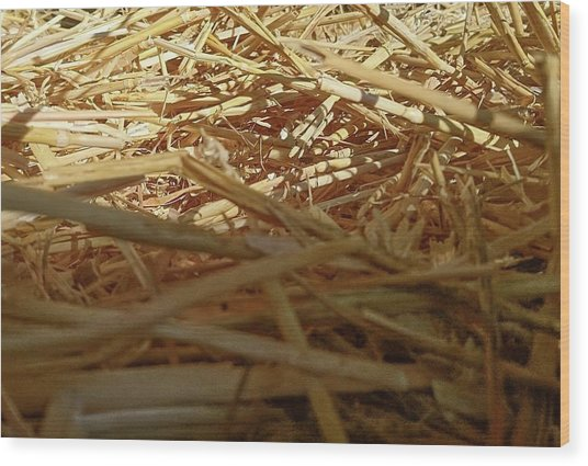 Golden Straw Bed Wood Print
