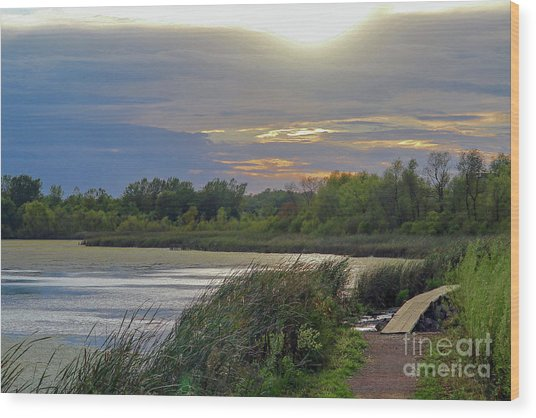 Golden Sunset Over Wetland Wood Print