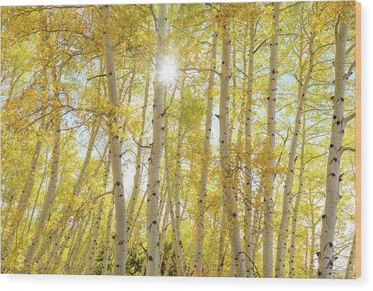 Wood Print featuring the photograph Golden Sunshine On An Autumn Day by James BO Insogna