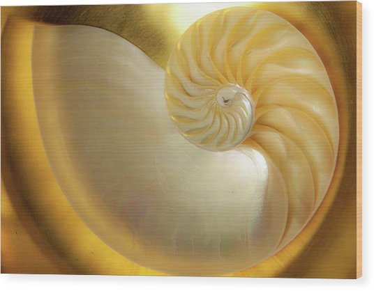 Golden_nautilus_0692 Wood Print