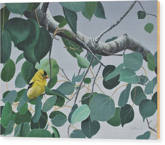 Goldfinch And Aspen Wood Print
