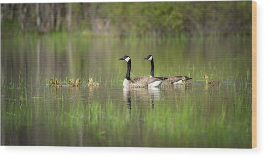 Goose Family #5 Wood Print